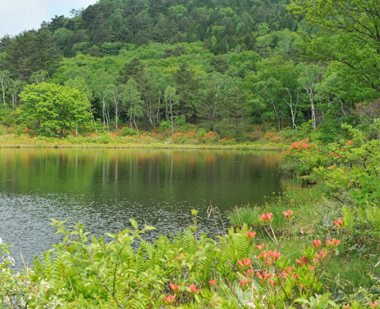 UNESCO Eco Park Certification image