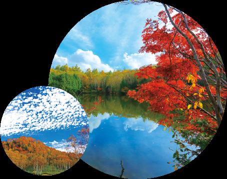 Green Season October : Autumn Leaves of Shiga Kogen