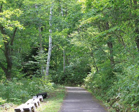 森林セラピーロードイメージ