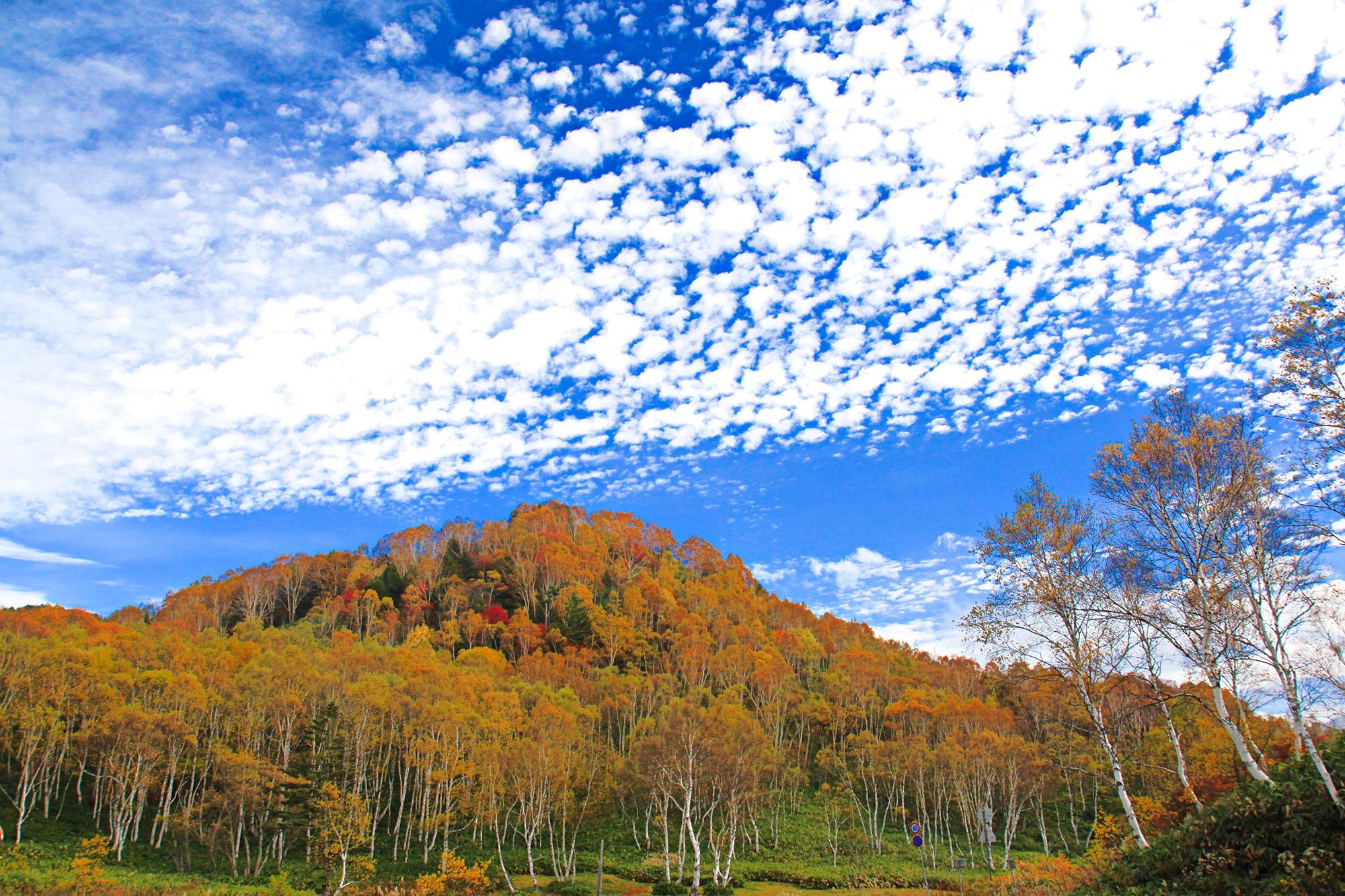 秋雲と紅葉