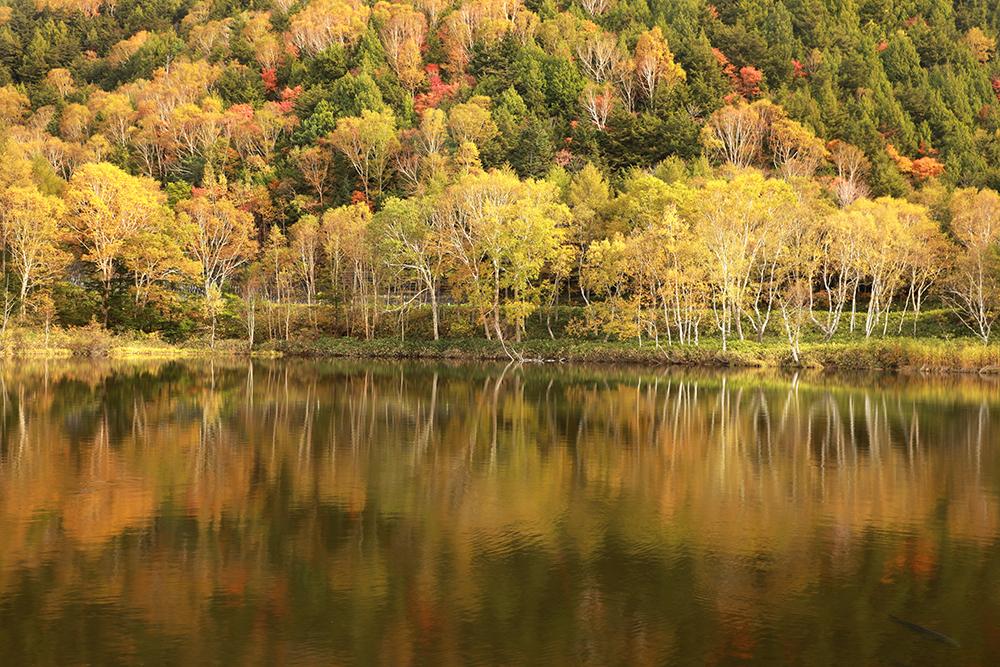 木戸池・田ノ原湿原の画像